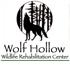Foundation4_3_columns_square_wolf_hollow_logo_web